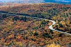 Curvy road. With colorful foliage Royalty Free Stock Photo