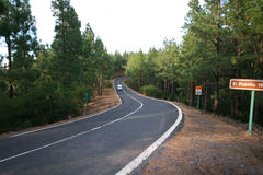Curvy road. In pine forest royalty free stock images