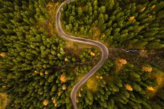Curvy road in atumn forest. Curvy road in atumn forest, top down view royalty free stock photos