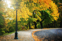 Curvy road in autumn park. Curvy road covered with leaves in beautiful autumn park Royalty Free Stock Photography