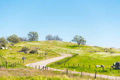 Curvy road country side in California. With green grass and blue sky Royalty Free Stock Photos