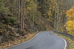 Curvy road in the fall. Curvy road in a fall forest in Germany royalty free stock images