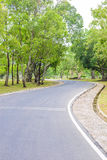 A Curvy Road Of Fresh Green. Trees in urban park Royalty Free Stock Image