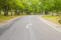 A Curvy Road Of Fresh Green. Trees in urban park Stock Image