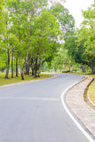 A Curvy Road Of Fresh Green Stock Images
