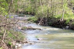 Curvy rzeka w drewnach obrazy royalty free