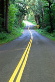Curvy Scenic Byway Highway Meanders Through Hoh Rainforest Stock Photo