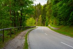 Curvy street in the green forest with no people, cars royalty free stock image