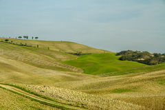 Curvy Tuscany Landscape in Autumn-Val dOrcia,Italy Royalty Free Stock Photo