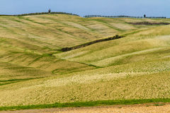 Curvy Tuscany Landscape in Autumn-Val dOrcia,Italy Stock Image