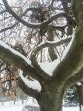 Curvy twisty unique tree with snow in winter Stock Photos