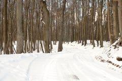 Vinterskog Royaltyfri Bild