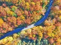 Curvy väg och en färgglad skog royaltyfri fotografi