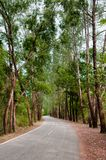 Wild road, forest road, pine tree road. Curvy wild road, forest road, pine tree road royalty free stock photo