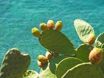 Cuscinetti dell'opunzia della pera del cactus Immagini Stock