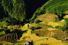 Cuscinetto del riso di Sapa-Viet Nam Immagine Stock