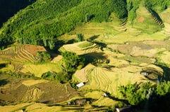 Cuscinetto del riso di Sapa-Viet Nam Fotografia Stock Libera da Diritti