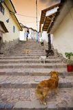 Cusco dogs. Typical street scene in the central part of Cusco, Peru Stock Photos