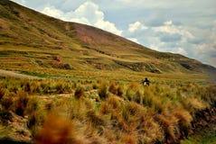Cusco jeździec Zdjęcie Royalty Free