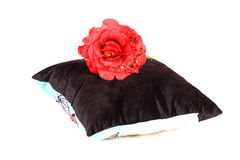 Cushion and flower Stock Image