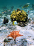Cushion sea-star with coral and fish Stock Photography