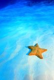 Cushion sea star Royalty Free Stock Images
