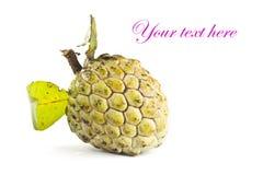 Custard apple Royalty Free Stock Image