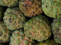 Custard Apple Obraz Royalty Free
