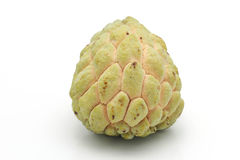 Custard apple (Annona squamosa) Stock Image