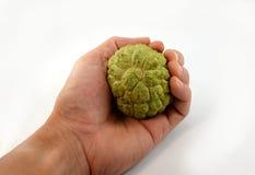 Custard apple in hand Stock Photo