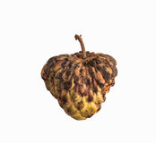 Custard apple rot and dry Royalty Free Stock Photo