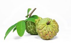 Custard apple or Sugar-apple. Royalty Free Stock Photos