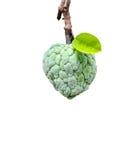 Custard apple Stock Image