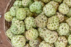 Custard Apples in a Basket royalty free stock image