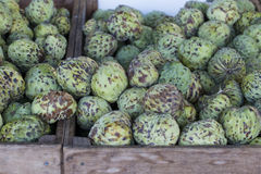 Custard Apples Royalty Free Stock Photography