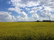 Custard land in austria. Europe, countryside Stock Photos