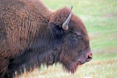 Custer公园在南达科他 库存照片