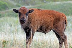 Custer Park i South Dakota royaltyfri fotografi