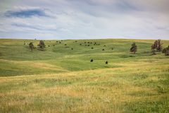 Custer stanu park, Custer, SD fotografia royalty free