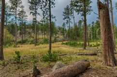 Custer State Park stock foto