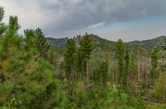 Custer State Park Royalty Free Stock Photography