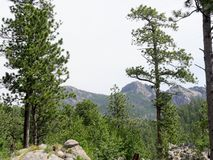 Custer State Park-foto's, Zuid-Dakota stock afbeeldingen