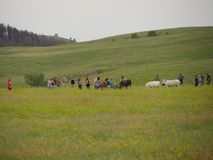Custer State Park, South Dakota. Custer County, South Dakota--July 2018: Tourists take photos and pet horses in a pasture at the Custer State Park in South stock photo
