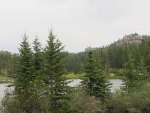 Custer State Park South Dakota arkivfoto