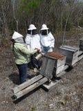 Custodi dell'ape in penisola dell'Yucatan fotografie stock libere da diritti