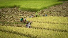 Custodia del arroz Foto de archivo libre de regalías