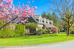 Custom built house. Cheery blossoms in the spring. Custom built luxury house with nicely trimmed and designed front yard, lawn in a residential neighborhood royalty free stock photos