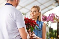 Customer buying poinsettia in nursery Stock Image