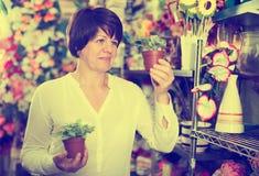 Customer choosing begonia Royalty Free Stock Photography