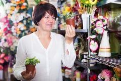 Customer choosing begonia Royalty Free Stock Image
